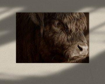 Schottischer Highlander von Mark de Paauw
