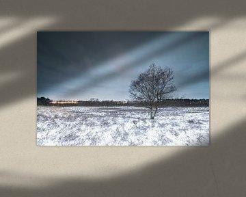 L'arbre dans le paysage hivernal sur Marcel Kerdijk