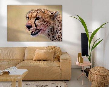 Cheetah na het diner van Peter Michel