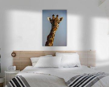 Giraffe van Peter Michel