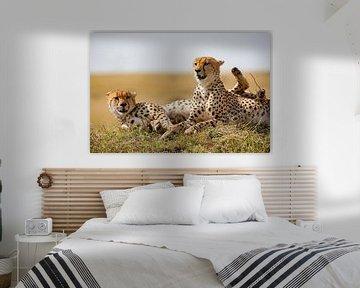 Pauze f. Cheetahs van Peter Michel
