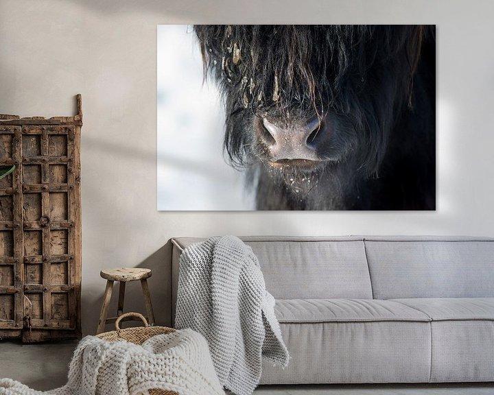 Sfeerimpressie: Close up Schotse Hooglander zwart van Cindy Van den Broecke