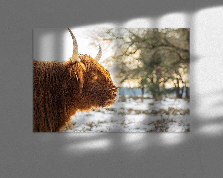 Sfeerimpressie: Schotse Hooglander in de sneeuw en zon van Karin Riethoven