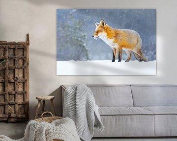 renard roux dans la neige