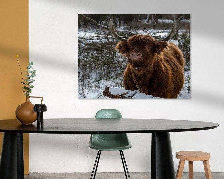 Beispiel: Schottischer Highlander im Schnee von Marjolein van Middelkoop