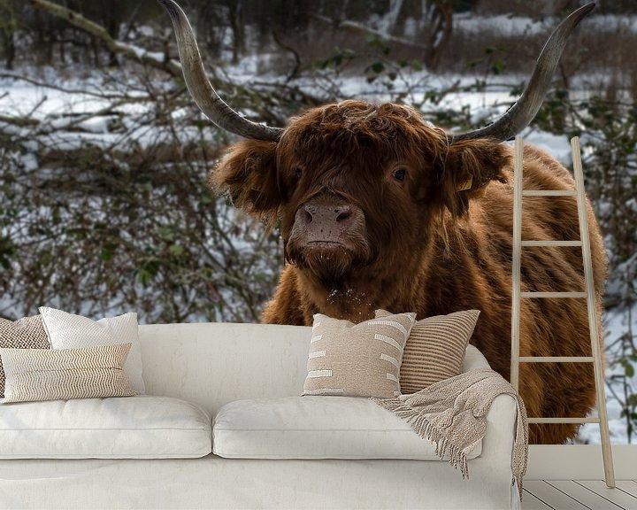Beispiel fototapete: Schottischer Highlander im Schnee von Marjolein van Middelkoop