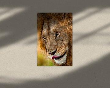 De tong van de leeuw van Peter Michel