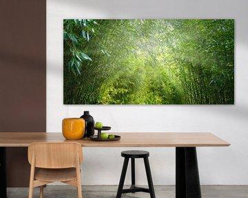 soleil dans l'idyllique forêt de bambous sur Dörte Stiller