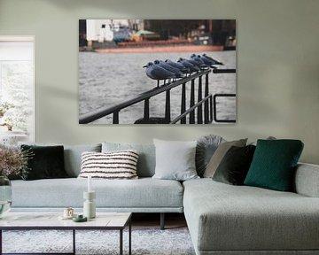 Meeuwen in de Rotterdamse Haven van Sharona de Wolf