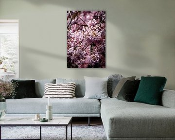 Rosenblüte von Digitale Schilderijen