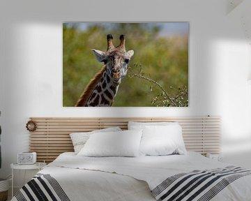 giraffe voeren van Peter Michel