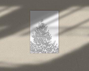 Ein Nadelbaum mit schneebedeckten Spitzen von Jörg Hausmann