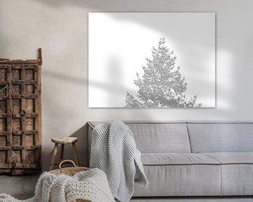 Ein Nadelbaum-Wipfel mit schneebedeckten Spitzen von Jörg Hausmann