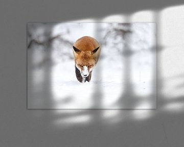 Rode vos in de sneeuw