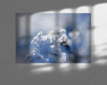 Makroaufnahme mit Gegenlicht, Schnee und Raureif in der Landschaft in Drenthe von Karijn | Fine art Natuur en Reis Fotografie