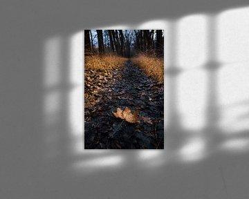 Sentier forestier avec feuille d'érable sur videomundum