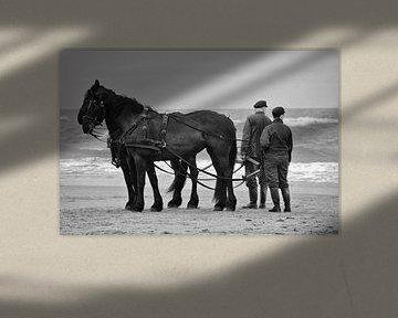 Friesische Pferde - Terschelling von Pierre Verhoeven