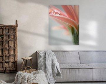 Wassertropfen auf rosa Gerbera-Blüte von Katrin May
