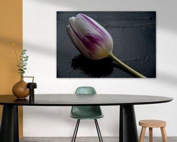 Kleur nuances op zwart close up foto van JM de Jong-Jansen