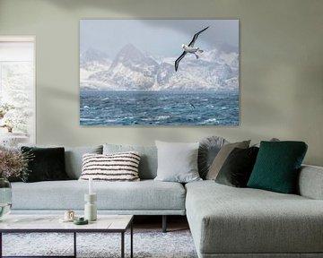 Reuzen storm vogel op het zuidelijkste punt van South Georgia van Ron van der Stappen