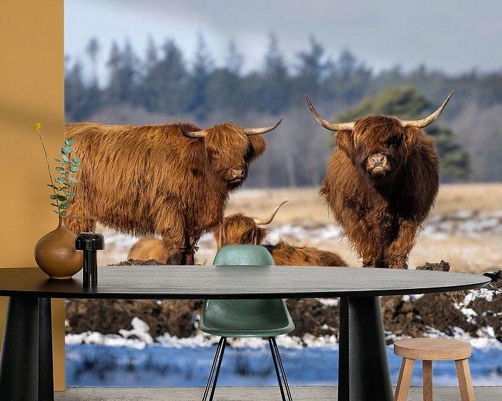 Sfeerimpressie behang: Schotse Hooglanders van Koos de Vries