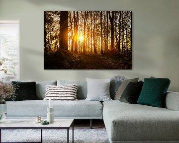 die Sonne scheint tief durch die Bäume von Hartsema fotografie