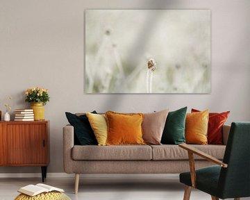 Fragiel winterbloempje.. van Frans Scherpenisse