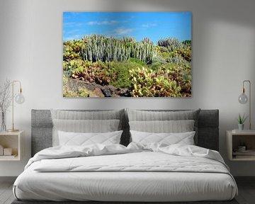 Sukkulenten auf Teneriffa von Katrin May