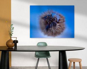 verwelkte Blume in der Wintersonne von Eric Joosten