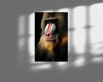 Mandrill Affe von Saskia Hoks