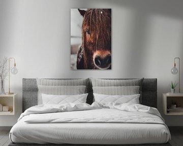 Braunes Pferd im Winter von Floor Schreurs