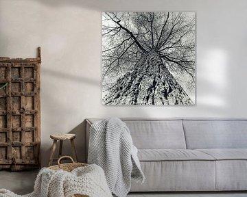 Winter Eiche von Kirsten Warner