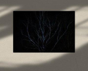 Birke in der Nacht von Joran Quinten