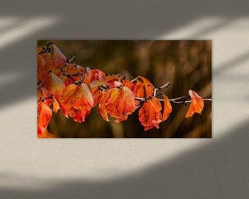 Tak met kleurrijke bladeren in de herfst van Dieter Walther