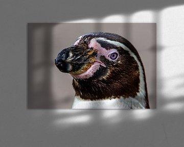 Pinguin van Scholtes Fotografie