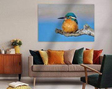 Le martin-pêcheur - profiter du soleil d'hiver
