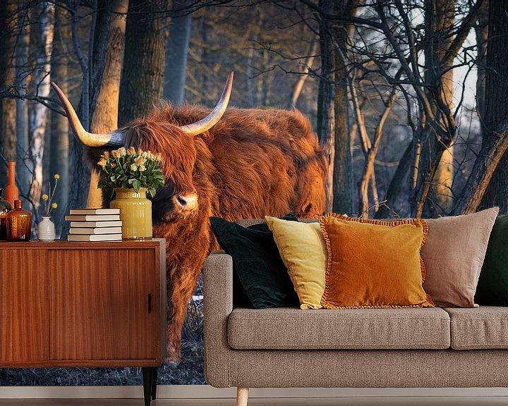 Sfeerimpressie behang: Schotse Hooglander in het ochtendlicht van Thom Brouwer