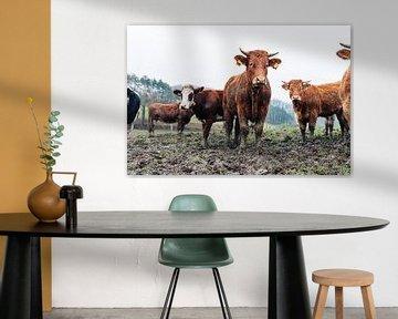Koeien in Weiland 002 van Quinten Tolboom