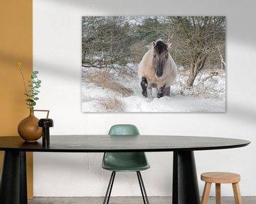 Konik in wintervacht van Leendert Noordzij Photography