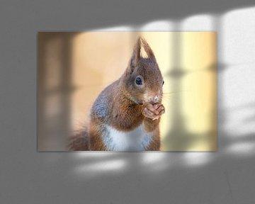 Eichhörnchen mit schönem Bokeh-Hintergrund von Cindy Van den Broecke