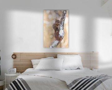 Schattig eekhoorntje op besneeuwde tak van Cindy Van den Broecke