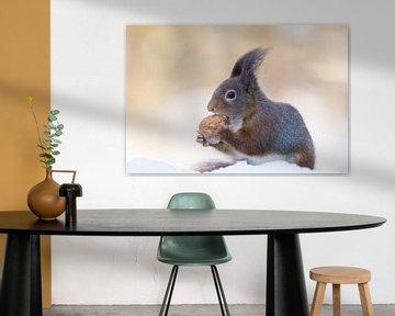 Eichhörnchen mit Walnuss im Schnee von Cindy Van den Broecke