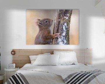 Close up eekhoorntje van Cindy Van den Broecke