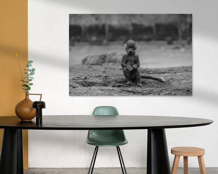 Sfeerimpressie: Jonge baviaan in Amersfoort van Kaj Hendriks