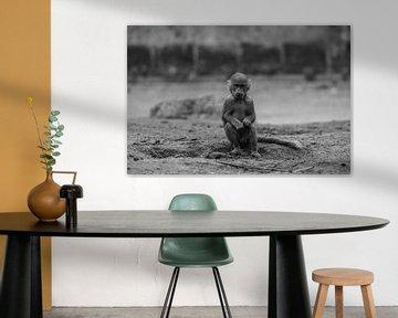 Junger Pavian in Amersfoort von Kaj Hendriks