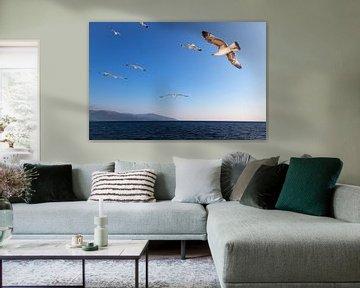 Zeemeeuwen in een blauwe lucht, boven e Egeische Zee in Griekenland. van Eyesmile Photography
