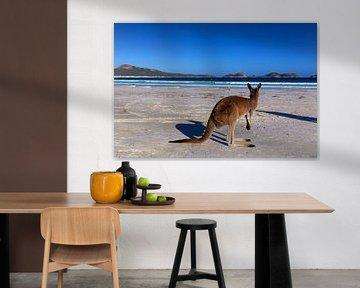 Kangourou sur une plage blanche en Australie occidentale sur Coos Photography