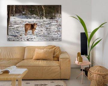 Un veau Tauros dans la neige de la forêt