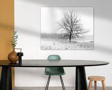 Een eenzame boom in een winters landschap. van Henk Van Nunen