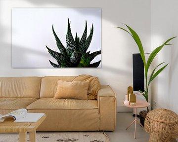 Aloe Aristata von Philipp Klassen